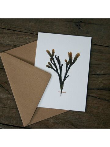 Serrated Wrack Greetings Card