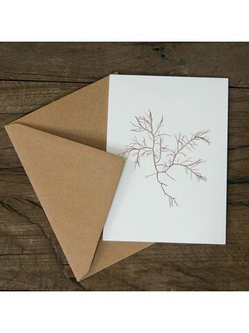 Banded Pincer Weed Greetings Card