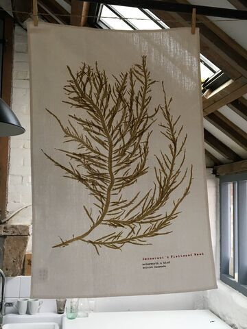 Linen Union Tea Towel - Desmarest's Flattened Weed