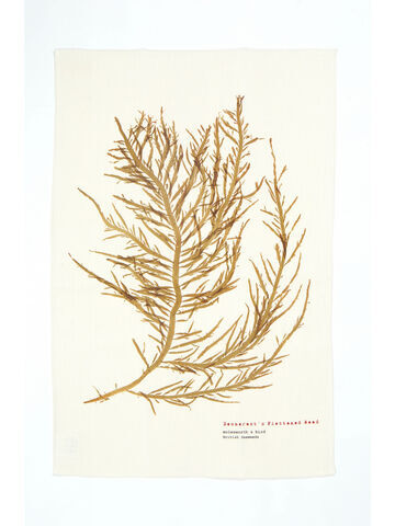 Seaweed Print Linen Union Tea Towel - Desmarest's Flattened Weed