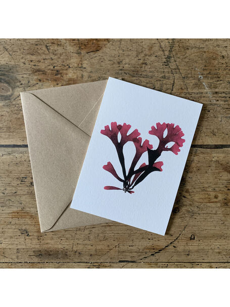 Rosy Fan Weed Greeting Card