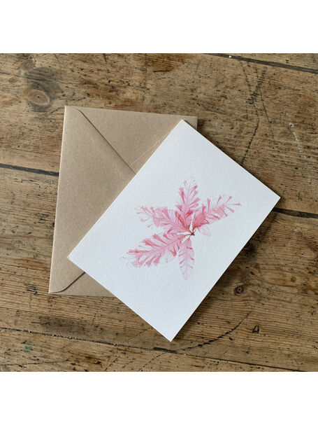 Sea Beech (pale pink) Greeting Card
