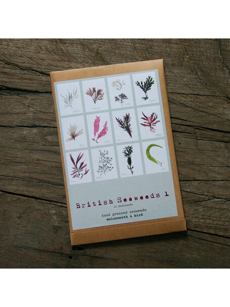 12 British Seaweeds Postcards SET ONE