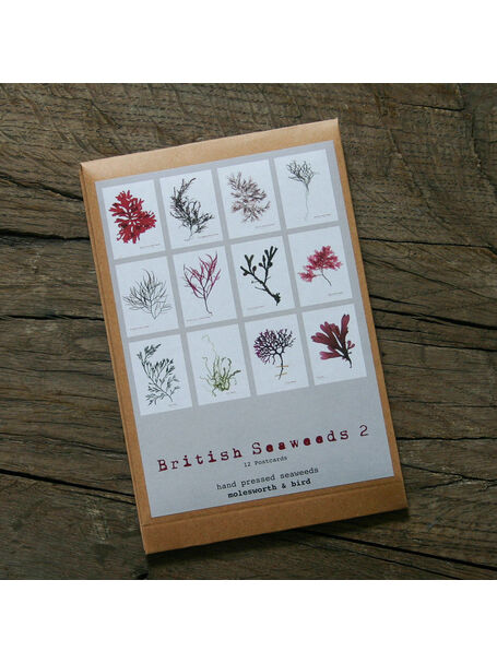 12 British Seaweeds Postcards SET TWO